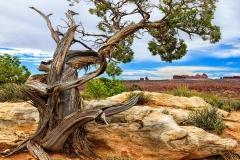 Arches National Park. Utah